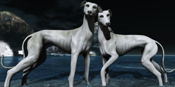 greyhounds1bs